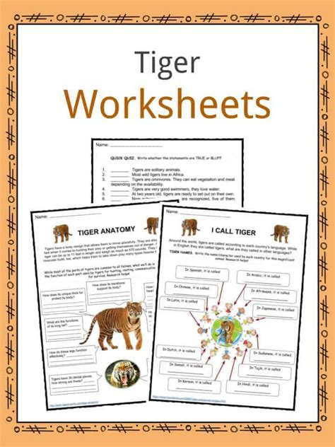 tiger facts worksheets diet habitat information  kids