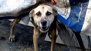 Rabies in Dogs: Fatal Virtually Extinct Disease