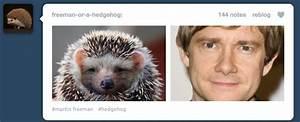 Martin Freeman Hedgehog Meme