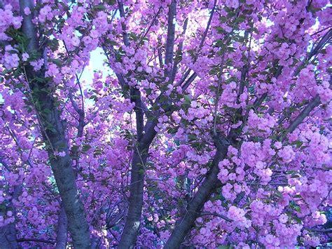 quot purple aesthetic flowers quot by emdizio redbubble