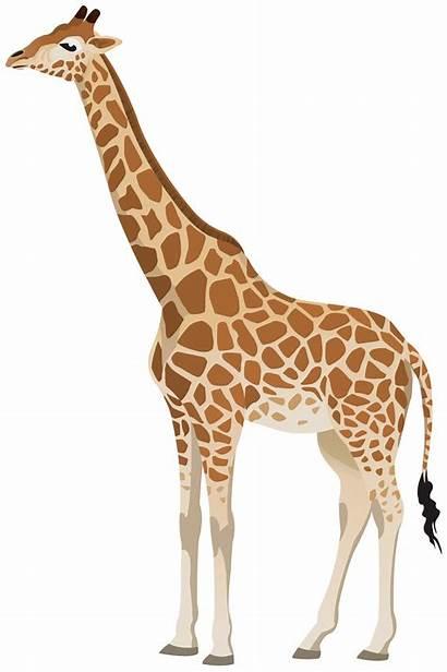 Giraffe Clipart Transparent Cartoon Animals Yopriceville Face