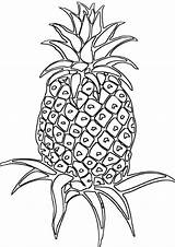 Pineapple Coloring Sunglasses Vegetable sketch template