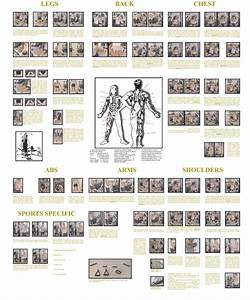 Exercise Routines  York Home Gym Exercise Routines