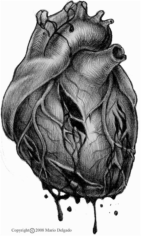 anatomical heart outline - Google Search | Alice's Tattoos | Human heart tattoo, Anatomical