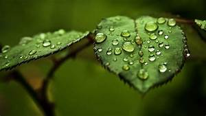 Water Drop On Leaf Hd | Theleaf.co