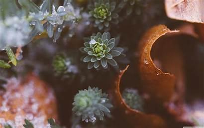 Plants Wallpapers Nature Air Mac Macbook Desktop