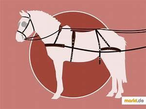 Markt De München Kontakte : pferdegeschirr das unentbehrliche zubeh r f r kutschfahrten ~ Yasmunasinghe.com Haus und Dekorationen