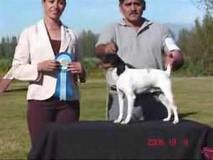 Tercera Exhibición Especializada de Fox terrier Chileno ...