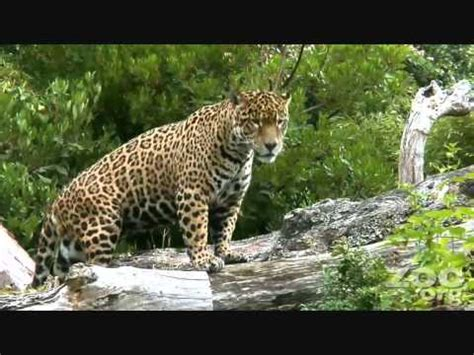 African Animals To Kids YouTube