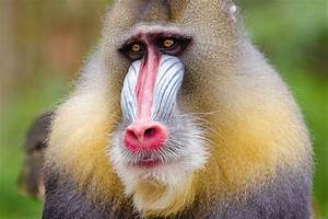 MailChimp Takes Back Mandrill: What It Means For Users - iWeb