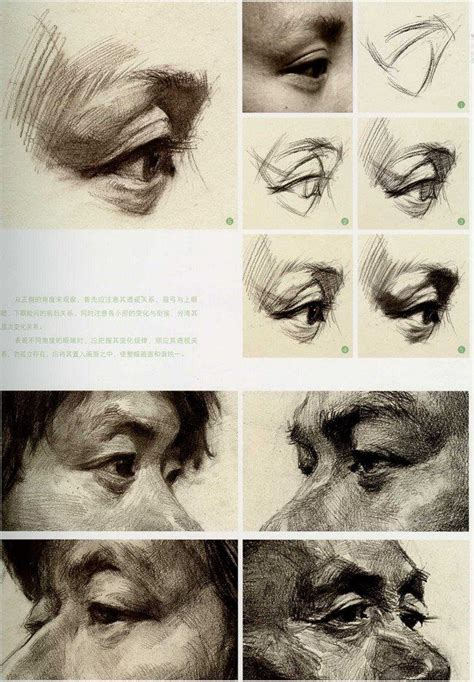 Best Ideas About Eye Anatomy On Pinterest Images Of Eyes Reference Website And