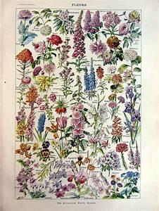 Blumen Trocknen Ohne Farbverlust : pin by franjo on botanical paints in 2020 botanical ~ A.2002-acura-tl-radio.info Haus und Dekorationen