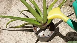 Arrosage Aloe Vera : comment planter de l 39 aloe vera 23 tapes ~ Nature-et-papiers.com Idées de Décoration