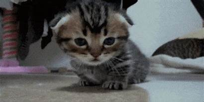 Kitten Hold Clickbait Tears Sees Blind Able