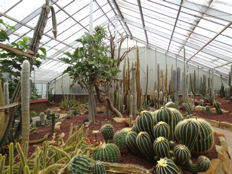 succulents greenhouse picture of wollongong botanic