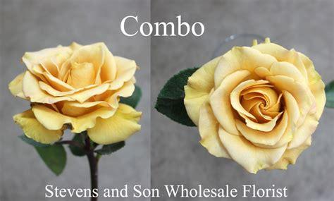 roses search   stevens  son wholesale florist