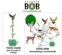 Difference Between Web and Food Chain