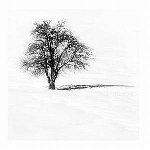Black and White photography Tree Nature Photography by gonulk