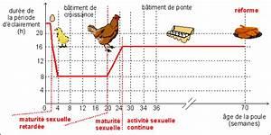 Nourriture Poule Pondeuse Pas Cher : alimentation poules pondeuses ~ Melissatoandfro.com Idées de Décoration