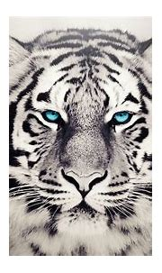 White Tiger Wallpapers HD (65+ background pictures)