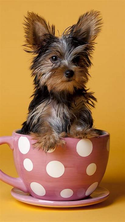 Yorkshire Terrier Puppy Dog Cup Sit Iphone