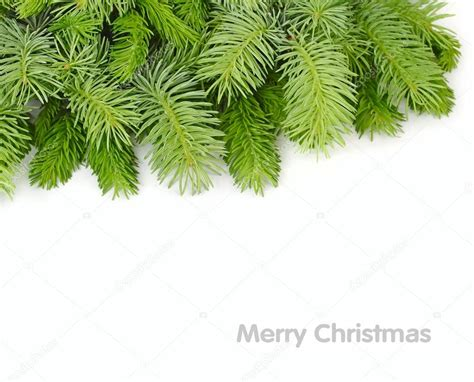 fluffy branches of a christmas tree on a white background