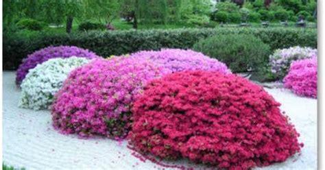 Long Flowering Bushes  Flowering Plants Azaleas