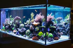 Coole Aquarium Deko : home aquariums enviropacs ~ Markanthonyermac.com Haus und Dekorationen