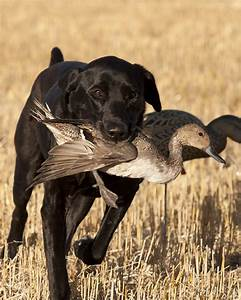 A List of 100 Good Names for Your Hunting Dog: Just Wow!