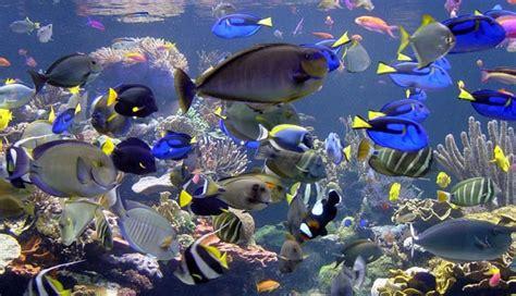 quel aquarium pour poisson 28 images fr aquarium pour poissons quel type de poisson choisir