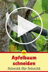Apfelbaum Wann Schneiden : apfelbaum schneiden obstbaum ~ Frokenaadalensverden.com Haus und Dekorationen