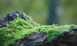 Experts Reveal How 470 Million Year Old Moss Made Earth U0026 39 S