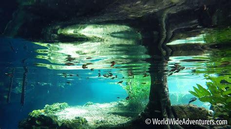 Grand Cenote Snorkelling - Yucatan, Mexico
