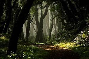 magic forest tumblr - Pesquisa Google   Forest tumblr ...