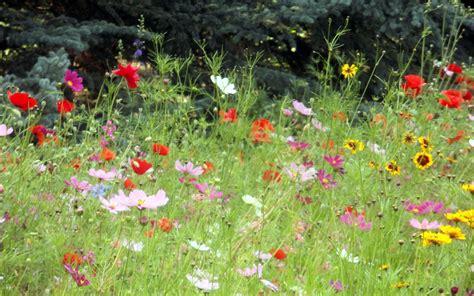 wildflower garden designs perennial wildflower garden design colorado native landscaping organic vegetable gardens