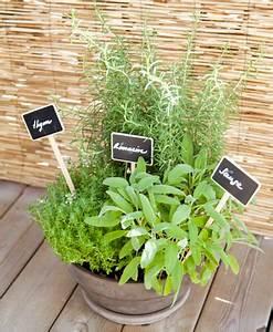 Herbes Aromatiques En Pot : comment planter des herbes aromatiques sur son balcon ~ Premium-room.com Idées de Décoration