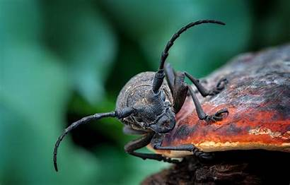 Beetle Insect Wallpapers Greepx Cave