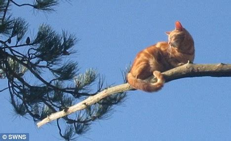 cat stuck in tree pictured rescue workers struggle to free cat stuck 75ft