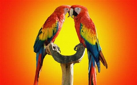 Colorful Birds Parrots