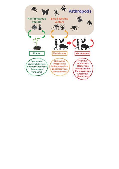 我所在eLife杂志发表文章——节肢动物中RNA病毒的高度多样性揭示 ...