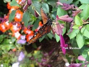 Epcot flower and garden show at disneyworld orlando 2012 for Butterfly garden orlando