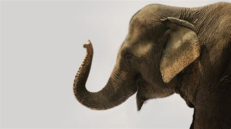 muscles    elephants trunk referencecom
