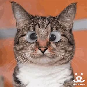 Fi Funny GIF Fi Funny Cat Discover Share GIFs