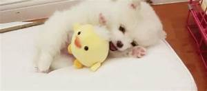 Cute Baby Animal GIFs - Find & Share on GIPHY