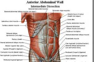 List Of Core Muscles Photos