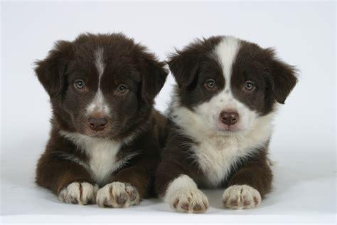 welchen geruch mö hunde nicht was kostet ein hund partner hund magazin