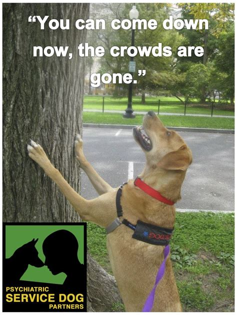 Ptsd Dog Meme - 1000 images about adorable service dogs and training tips on pinterest