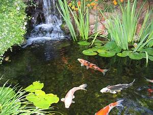 DIY Koi Fish Pond | Ideas for the Home | Pinterest