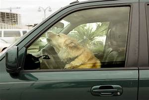 driving in austin has gone to the dogs