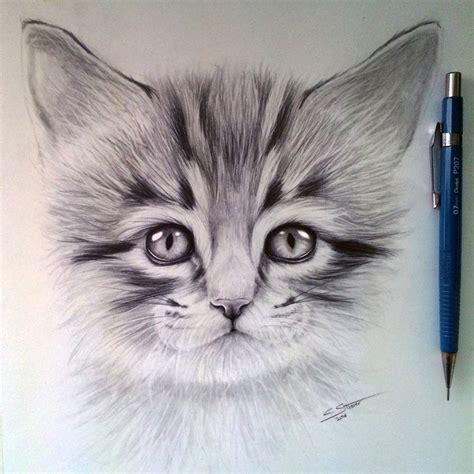 Kitten Drawing By Lethalchris On Deviantart